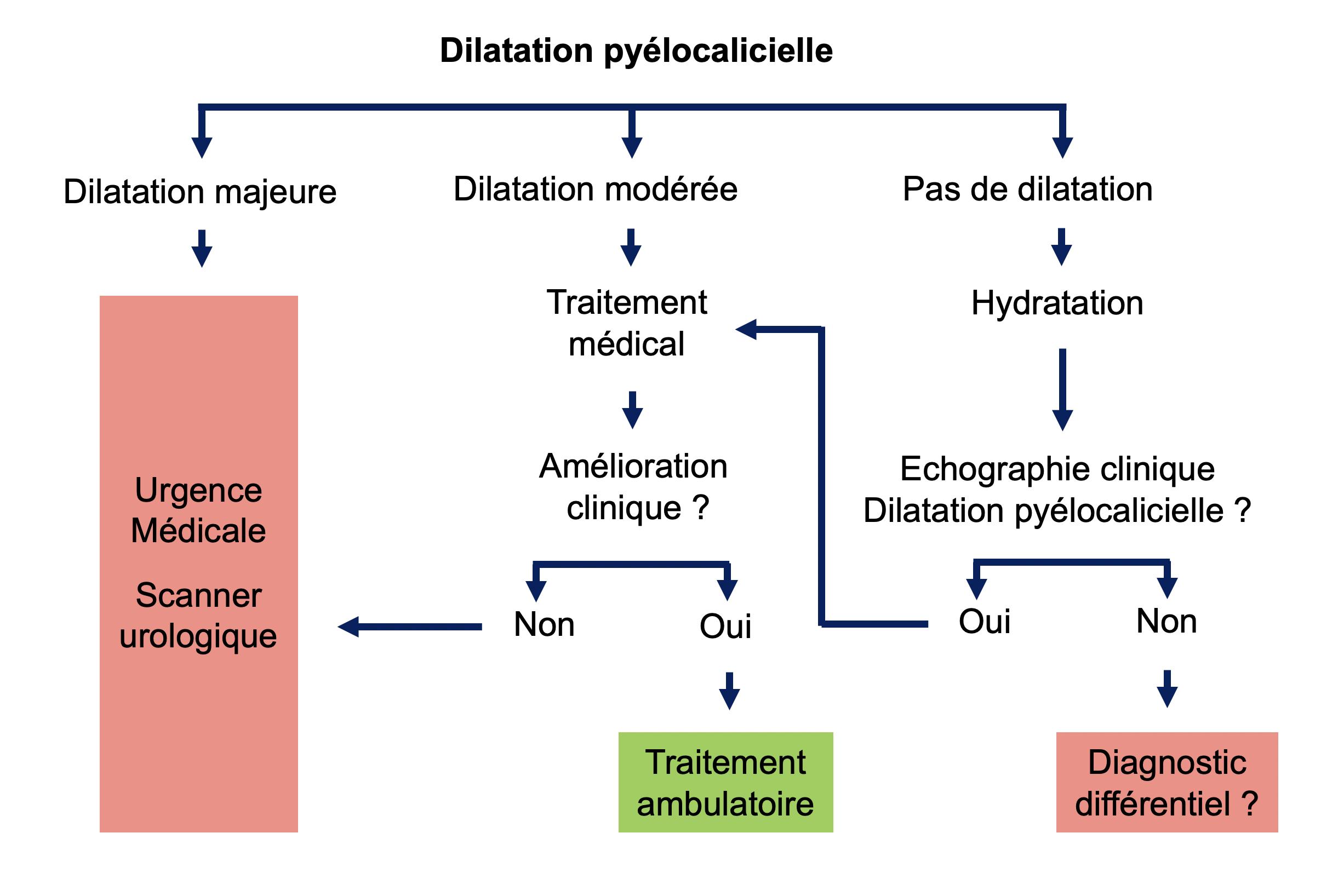 Organigramme dilatation pyélocalicielle